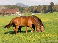Highlight for Album: Pferde