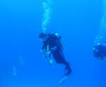 Austauchen im Blauen