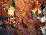 Cala Basto - typischer Mittelmeerbewuchs
